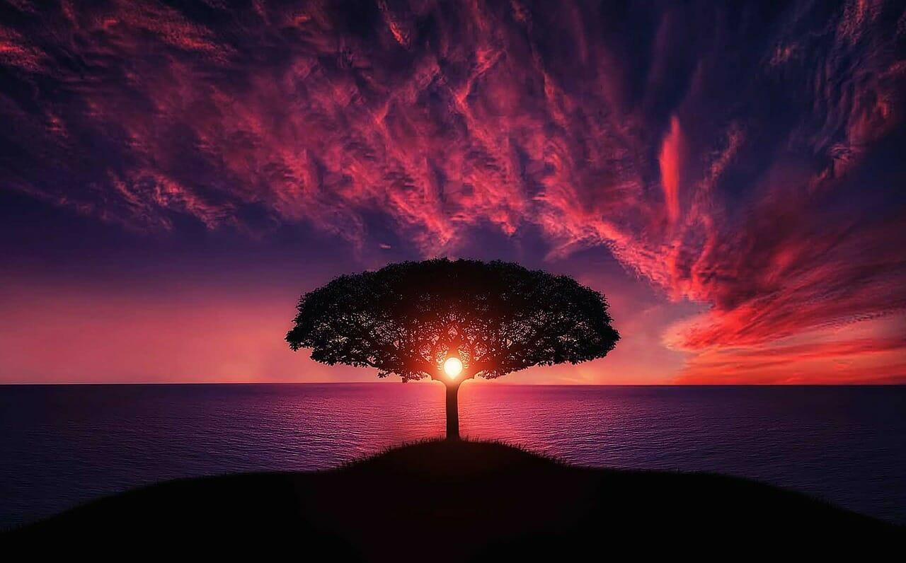 défi : arbre magnifique